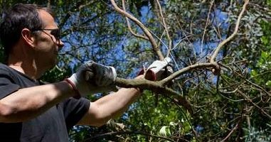 How and Why Get an Arborist Certification?