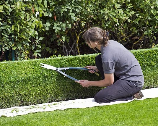 How To Become A Professional Gardener